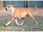 AMSTAFF Thelma (AtaxiaClear)