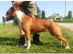 AMSTAFF Thess (Ataxia Clear)