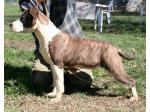 AMSTAFF Maya (ataxia Clear By Parental)