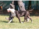 AMSTAFF Money  (Ataxia Clear By Parental )