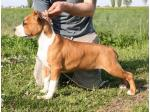 AMSTAFF Nikita (Ataxia Clear) HD-B ED-0 Cardio Normal